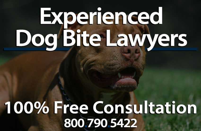 Dog Bite Lawyer In Los Angeles