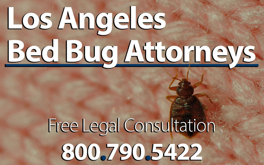 Bed bug attorney los angeles infestation lawsuit for Bed bug lawyer